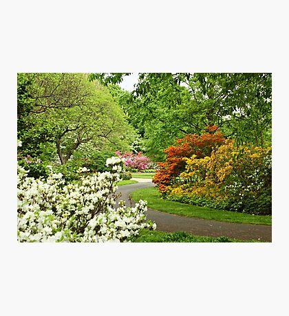 Azalea Gardens - Philadelphia - Pennsylvania - USA Photographic Print