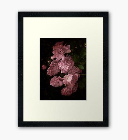 An Abundance of Roses Framed Print