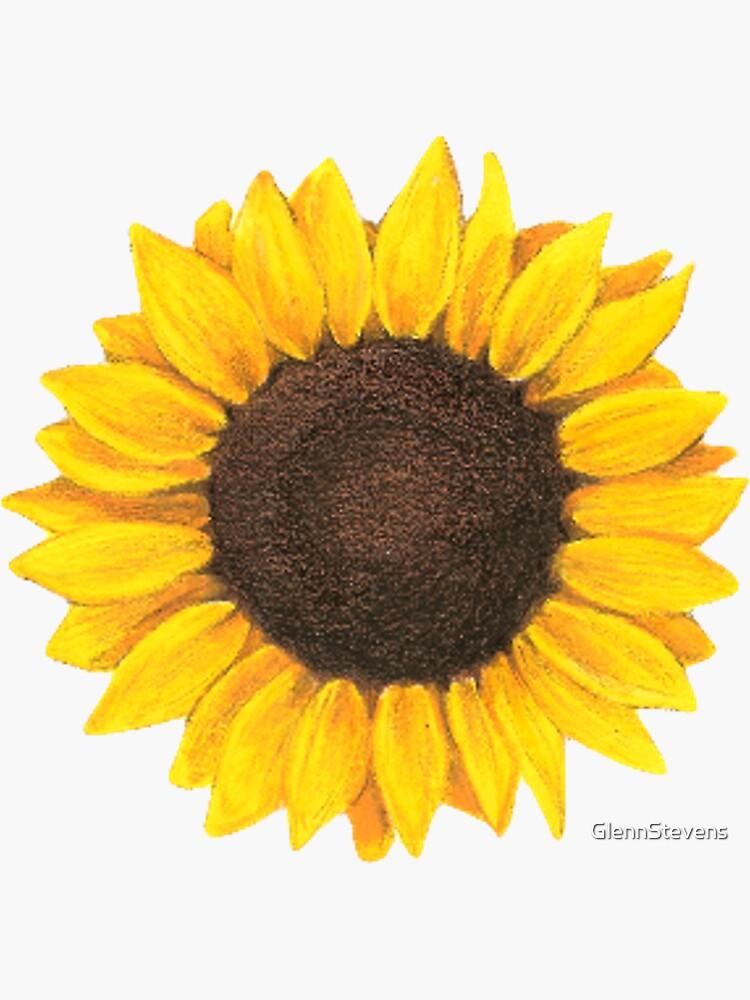 Sunflower drawing by GlennStevens
