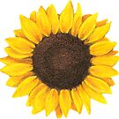 Sunflower drawing by GlennStevens