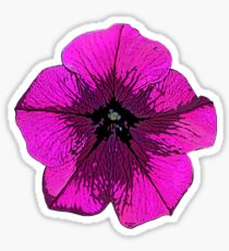 Purple Petunia Sticker