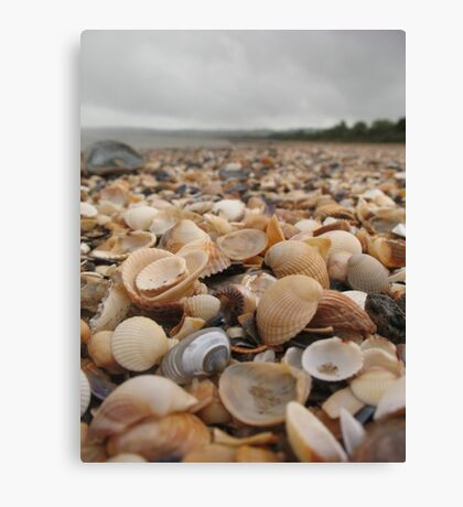 Along the seashell beach Canvas Print