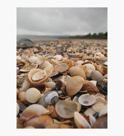 Along the seashell beach Photographic Print