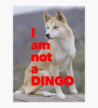 Tom Wheeler is a Dingo Photographic Print