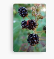 Berry berry nice Canvas Print