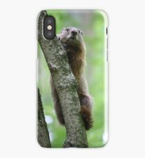 Groundhog in a Tree iPhone Case/Skin