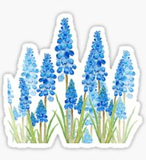 blue grape hyacinth forest  Sticker