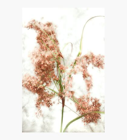Wild Indian Rice in Autumn Photographic Print