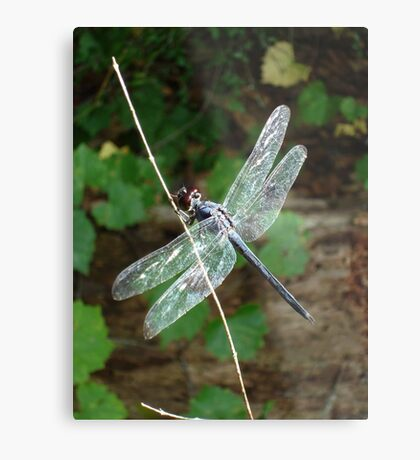 SLATY DRAGONFLY ON SILVER WINGS Metal Print