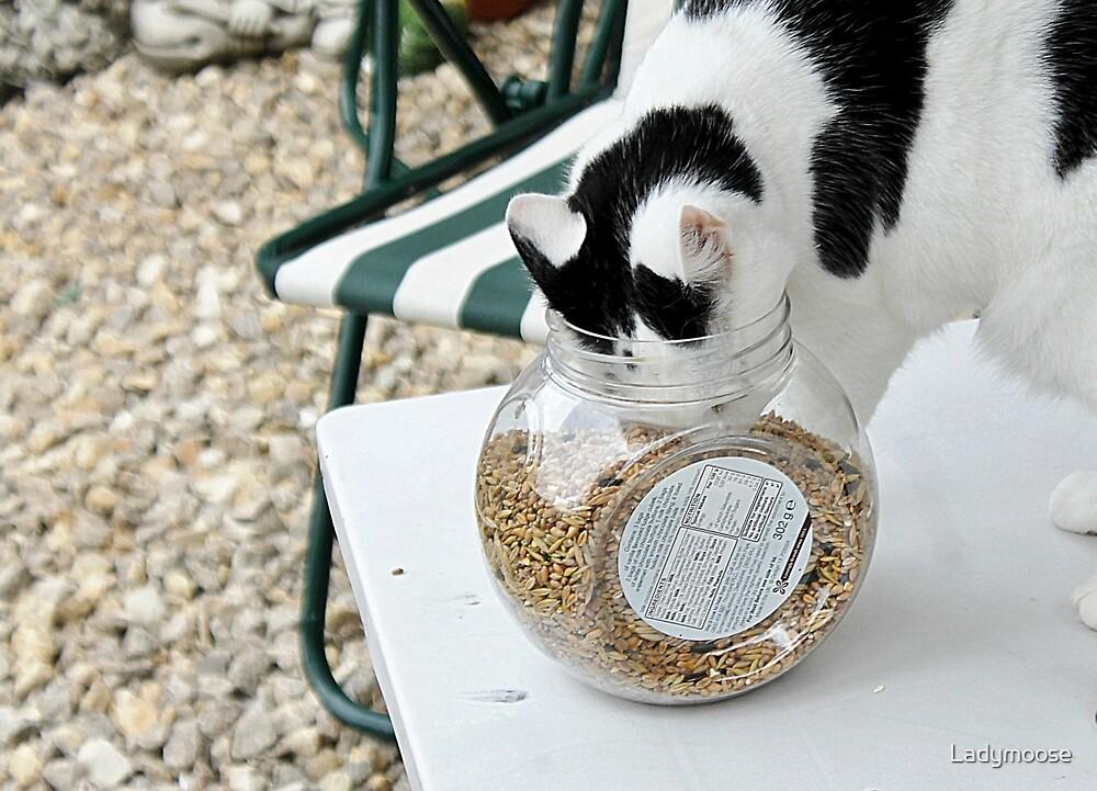 Cat Burglar Too by Ladymoose
