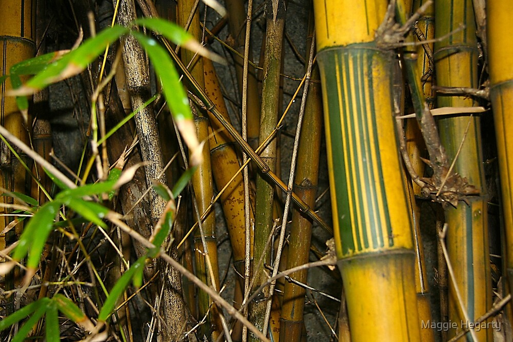 Bamboo tangle by Maggie Hegarty