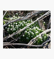 Water Cress Photographic Print