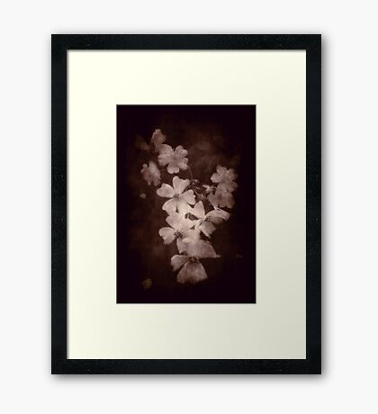 Where the wild roses grow ... Framed Print