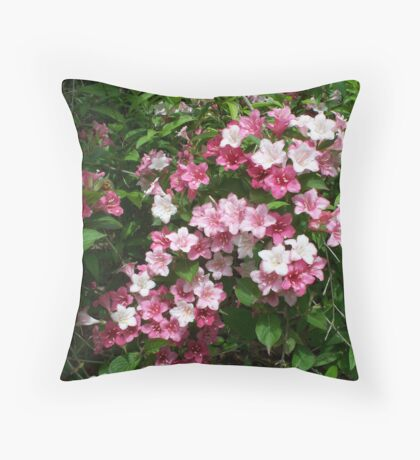 Spring Pinks - Carnival Wigelia 6 Throw Pillow