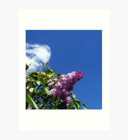 Lovely Lilac 3 Art Print