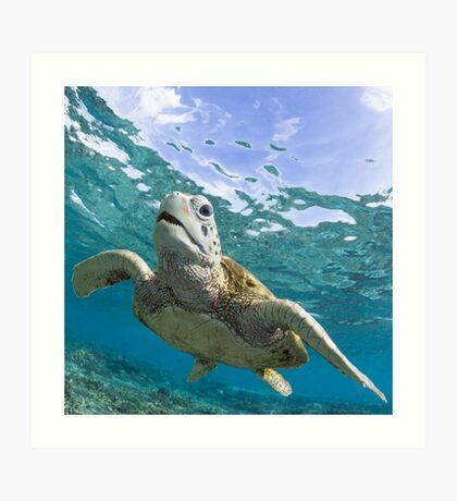 Turtle grin Art Print
