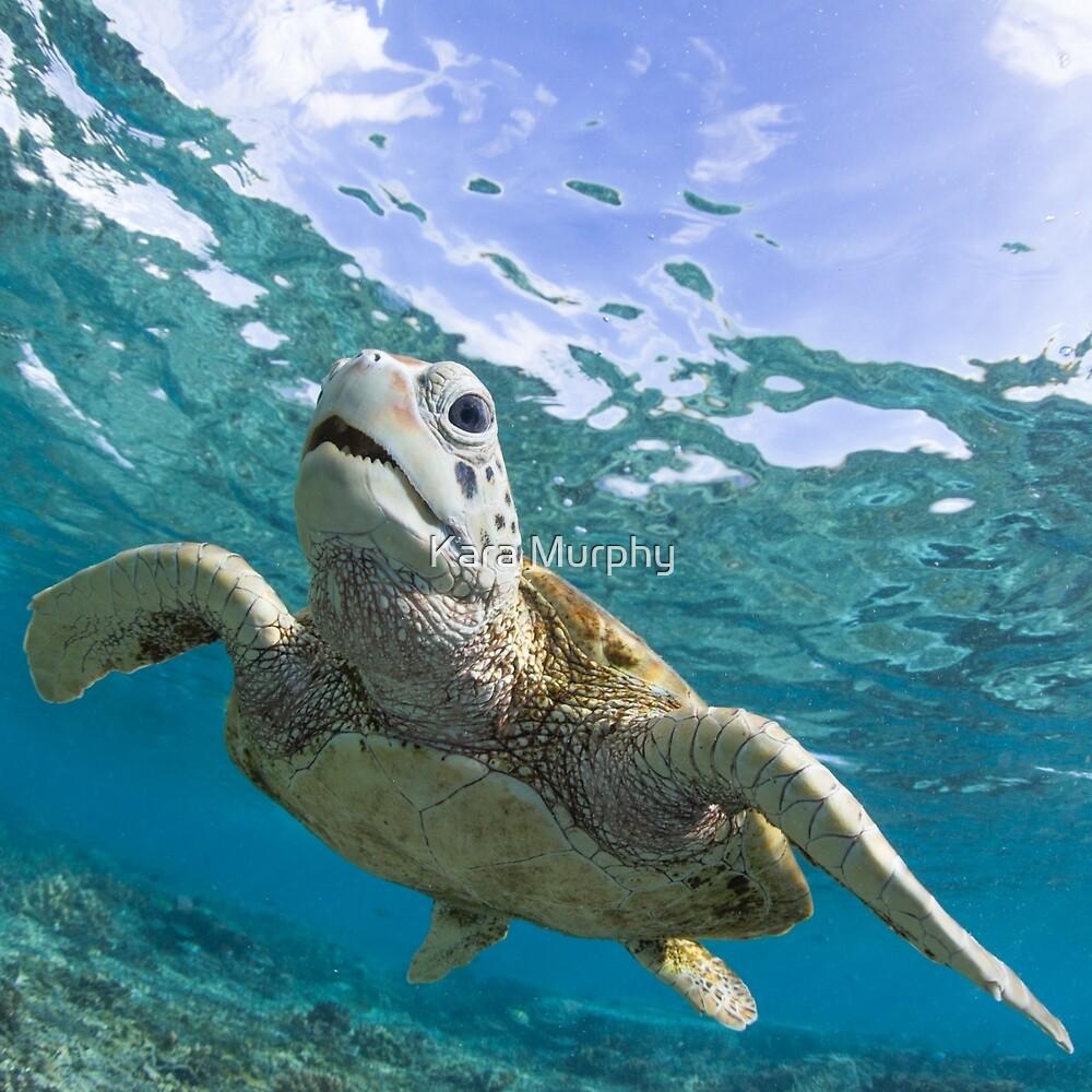 Turtle grin by Kara Murphy