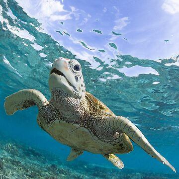 Turtle grin by KaraMurphy