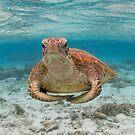 Turtle yoga pose by Kara Murphy