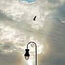 Capture in the Clouds by AnneDB