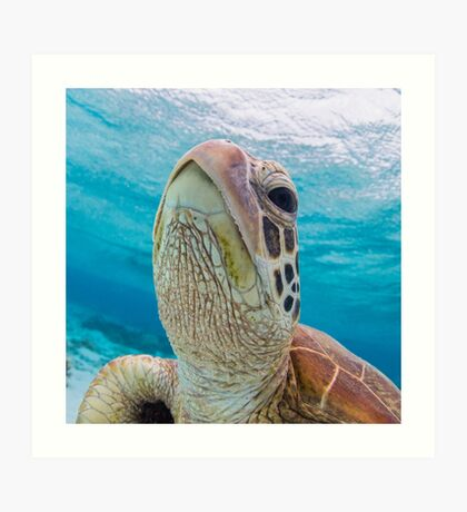 Turtle close-up Art Print