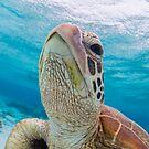 Turtle close-up by Kara Murphy