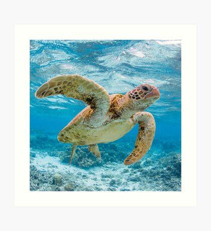Turtle star Art Print