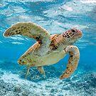 Turtle star by Kara Murphy