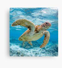 Turtle star Canvas Print