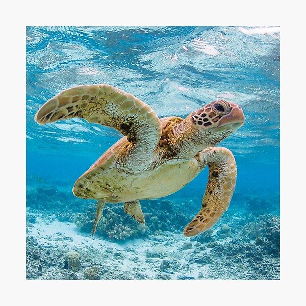 Turtle star Photographic Print