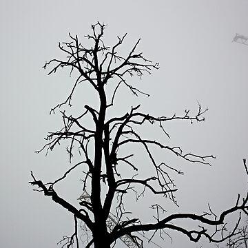 Dark tree by oleksiyvovk