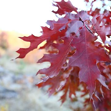 Autumn colorfull leaves by oleksiyvovk