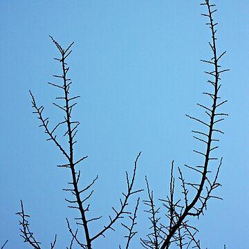 Tree blue by oleksiyvovk