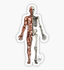 Half Muscle - Half Skeleton Sticker