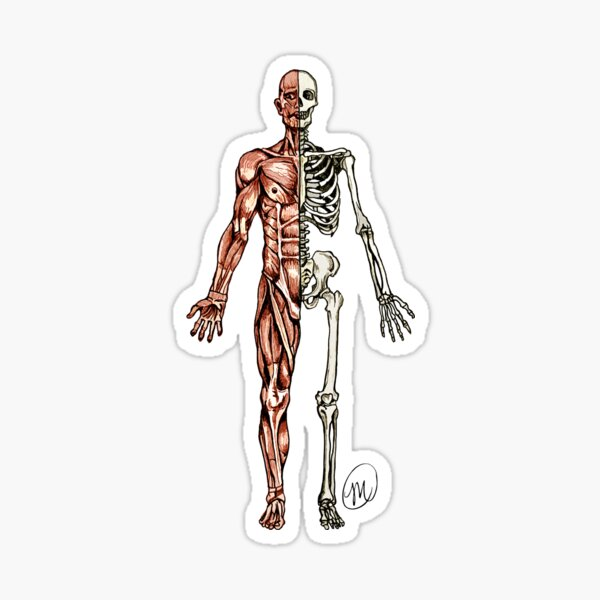 Half Muscle - Half Skeleton Sticker