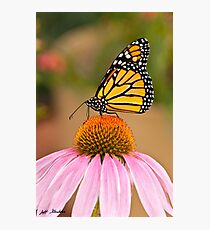 Monarch Butterfly on a Purple Coneflower Photographic Print