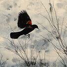 Red Wing Blackbird by Rosalie Scanlon