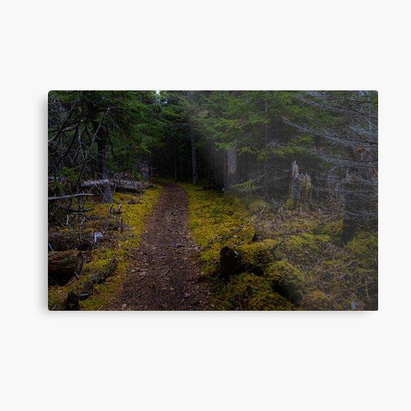 Alaskan Trailhead Metal Print