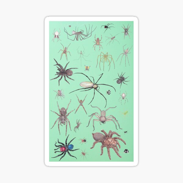 Spiders with green background Sticker