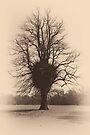 Sepia Silhouette of a tree  by Sara Sadler