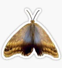 Real Butterfly No. 4 - Dusty Gold and Blue Sticker