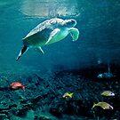 Green Sea Turtle by Leanne Kelly