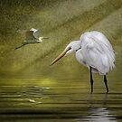 Everglades Evening by Brian Tarr
