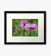 purple utopia Framed Print