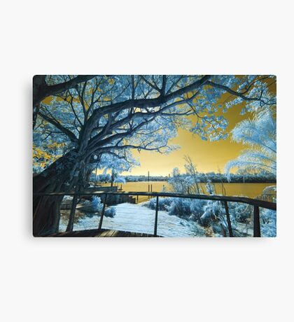 The Fig Tree and the Eleanor Schonell Bridge Canvas Print