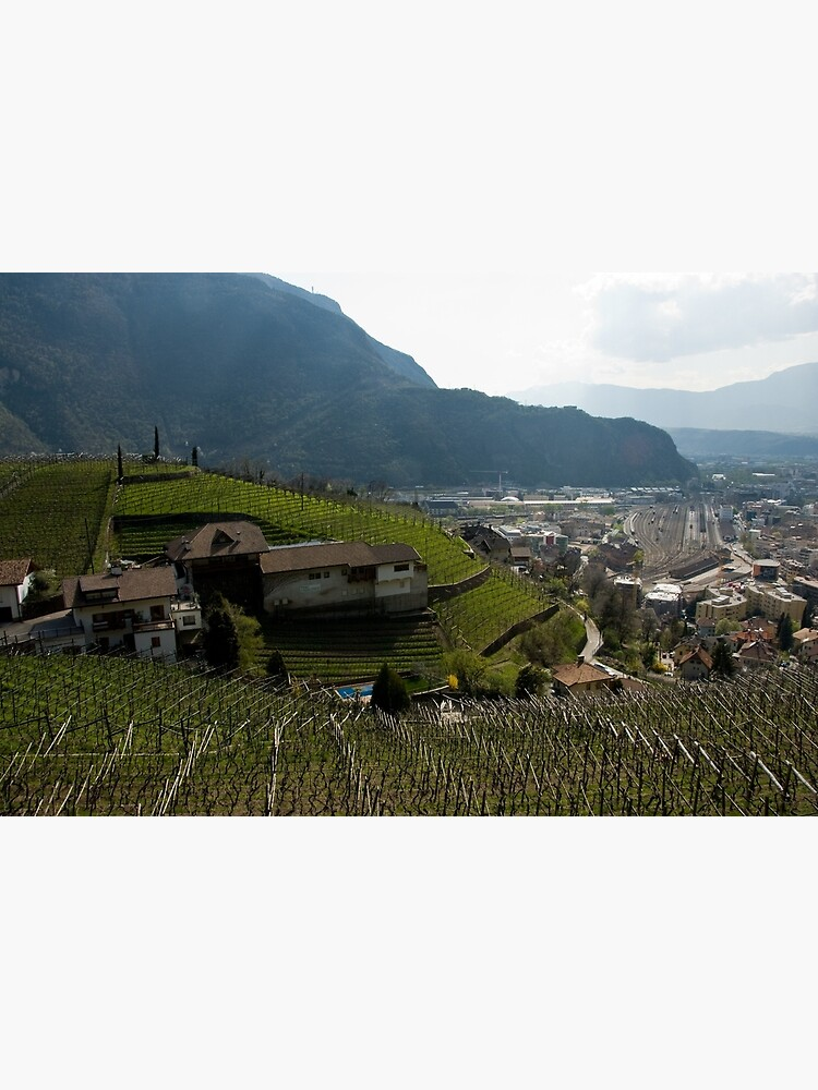 Hillside Vineyard, Bolzano/Bozen, Italy by leemcintyre