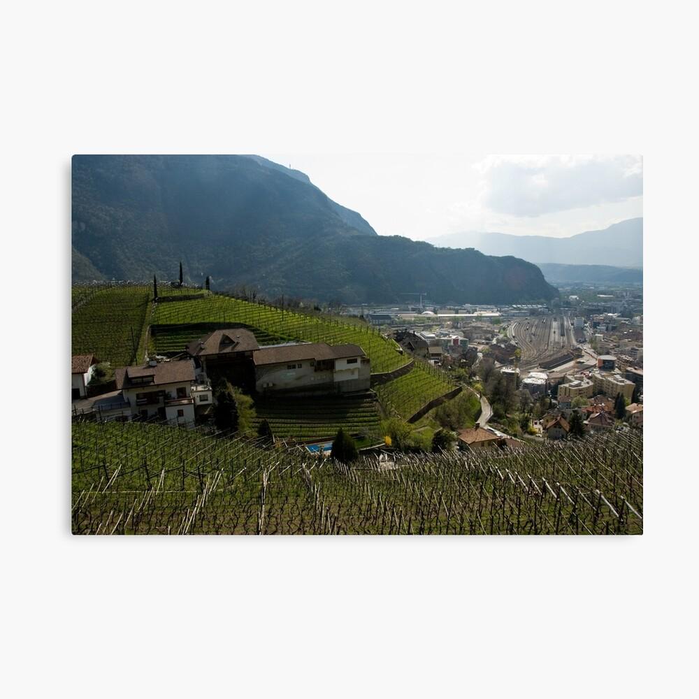 Hillside Vineyard, Bolzano/Bozen, Italy Canvas Print