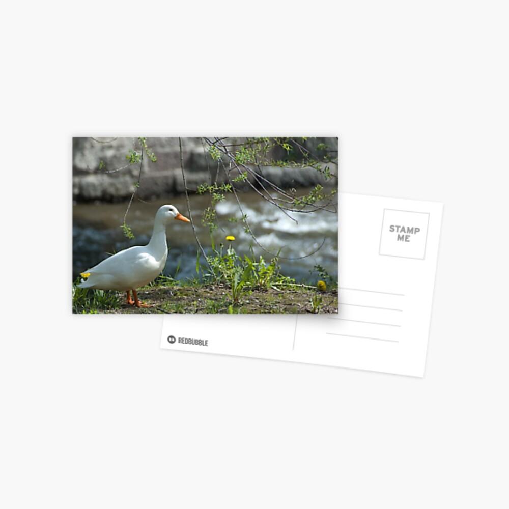 """Just ducky!"" Postcard"