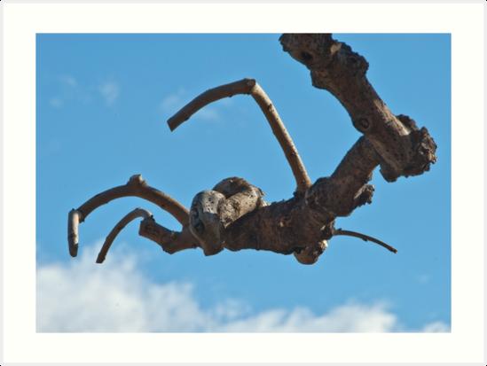 """Spider"", Bolzano/Bozen, Italy by L Lee McIntyre"