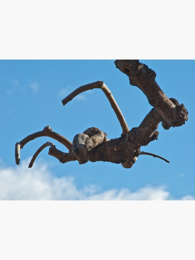 """Spider"", Bolzano/Bozen, Italy by leemcintyre"